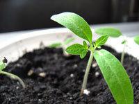 seeds1.jpg